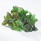 Various fresh tea leaves