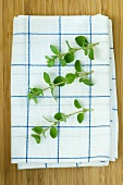 Oregano sprigs on a tea towel