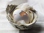 Cracked Egg Shell in a Nest