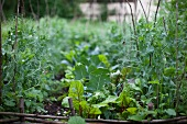 A vegetable patch with a willow twig fence