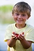 A little boy holding wild strawberries