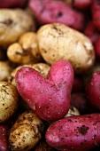 A red, heart-shaped potato