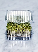 Fresh cress in a plastic container
