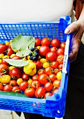 A person holding a crate of tomatoes and grapes