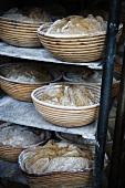 Freshly baked bread on shelves in a bakery