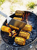 Corn cobs being grilled