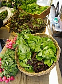 Assorted Salad Greens at the Union Square Greenmarket, New York City