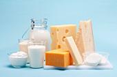 Verschiedene Milchprodukte (Käse, Joghurt, Quark, Milch) vor blauem Hintergrund