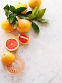 Stillleben mit Grapfefruits