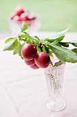 Plums on a twig and in a vase