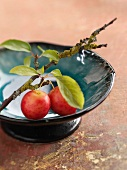Plums on a branch in a dish