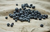 A bunch of fresh blueberries on a burlap bag