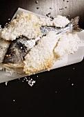 Gilt-Poll in Salt Crust
