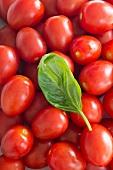 Viele Tomaten der Sorte Roma und ein Basilikumblatt