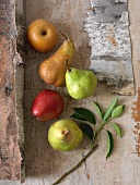 Variety of Pears on Rustic Wood; From Above
