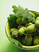 A bowl of green acorns and leaves