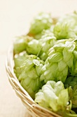 A basket of hops umbels (close-up)