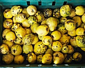 Quinces in a crate