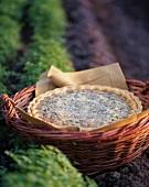 Herb quiche in basket