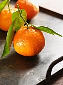 Mandarin oranges with leaves