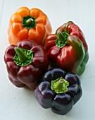 Vier Paprikaschoten (rot, orangefarben, violett)