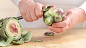 Removing the outer leaves from artichokes