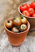 Black Cherry tomatoes and red tomatoes in terracotta pots