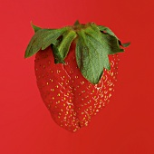 One strawberry against red background