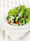 Bib Lettuce Salad with Blue Cheese and Grape Tomatoes in a White Salad Bowl