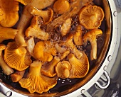 Chanterelles being washed