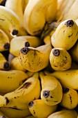 Reife Bananenstaude (Nahaufnahme)