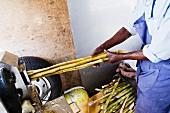 Dunkelhäutiger Mann bei der Verarbeitung von Zuckerrohr