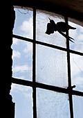 Deko-Vogel an Scheibe eines Sprossenfensters befestigt