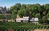 A vineyard in Hillsborough, Purcellville, Virginia, USA