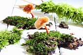 Mushrooms on moss on wooden background