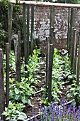 Plants and stakes in garden plot