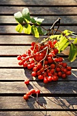 Rowan berries on a twig on a wooden surface