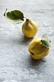 Two quinces with leaves