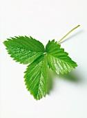 A strawberry leaf