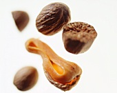 Nutmeg and nutmeg flower