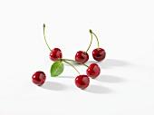 Winter Cherries on White Background