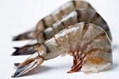 Three raw prawns
