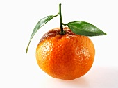 A mandarin orange with leaves