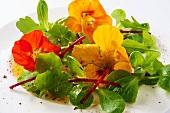 Lamb's lettuce with nasturtium flowers