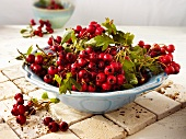 A bowl of fresh hawthorn berries