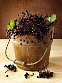 Fresh elderberries in a wooden bucket