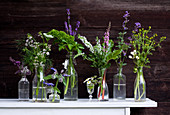 Flowering garden herbs in glasses and bottles on white table against dark wooden wall