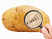 Magnifying glass in front of potato showing strand of DNA