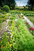 Large garden with vegetables and flowers