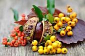 Kastanie und herbstliche Beeren